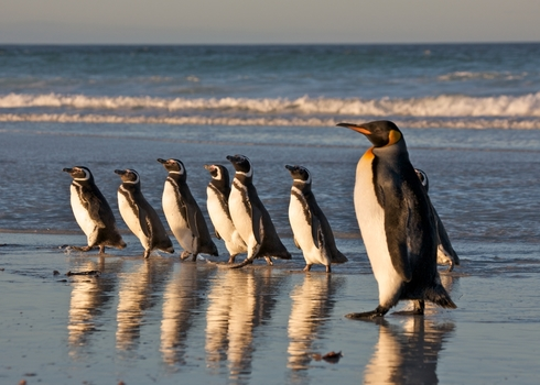 Optimized Ib As Different Species Penguins Standing Together (Falklands) 69456628 Josh Anon