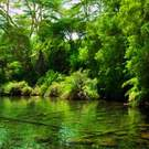 Jungle, Green Bush And Water Spring In Africa. Tsavo West, Kenya 130142492 Photocreo Michal Bednarek