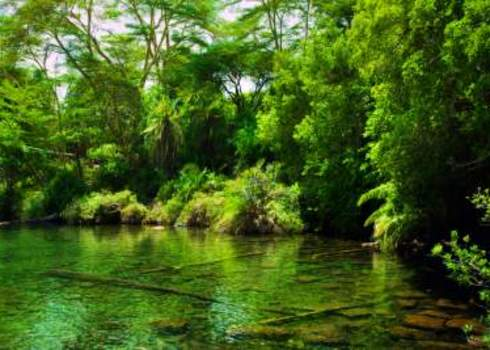 Jungle, Green Bush And Water Spring In Africa. Tsavo West, Kenya 130142492 Photocreo Michal Bednarek