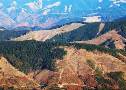 Deforestation Wild Spread Deforestation Rechitan Sorin