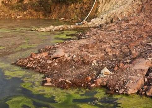 Eutrophication Environmental Damage Andn Algae Dominique Landau