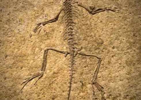 Extinction Fossil Of A Prehistoric Creature 118789216 Marcio Jose Bastos Silva