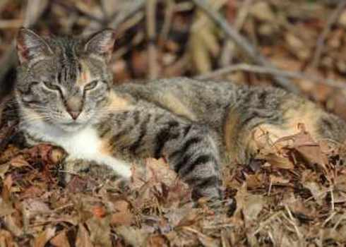 Feral Homeless Wild Feral Cats In The Woods 201693680 Joseph M. Arsenau