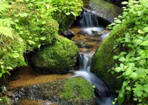 Freshwater Mountain Stream Among Mossy Stones Zeljko Radojko