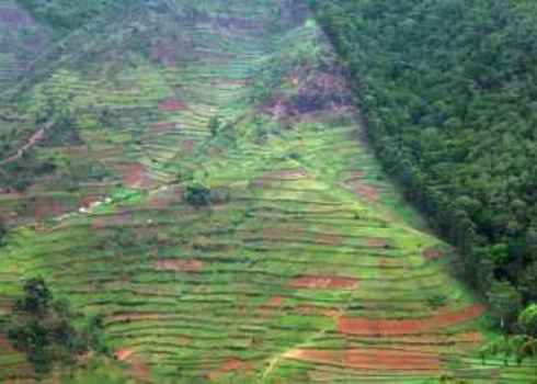 Habitat Conversion Aerial View Showing The Border Of The Bwindi Impenetrable Forest In Uganda (Africa) 86884465 Prill