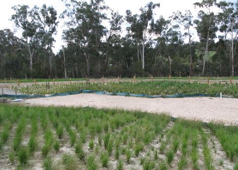 Restoration Wetland Restoration In A Ustralia Wikimedia Commons Nick Carson