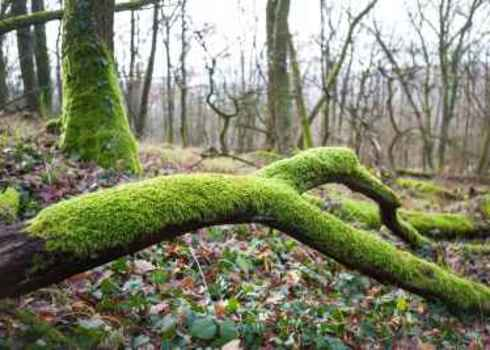 Supporting Services Broken Twig Fallen On The Ground Covered With Lush Green Moss 182399123 Hraska