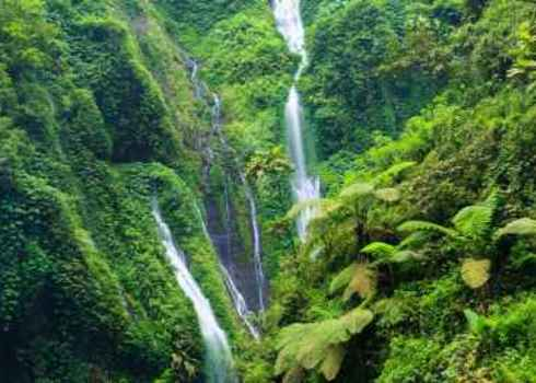Hotspot Madakaripura Waterfall   Deep Forest Waterfall In East Java, Indonesia 140551585 James Jones Jr