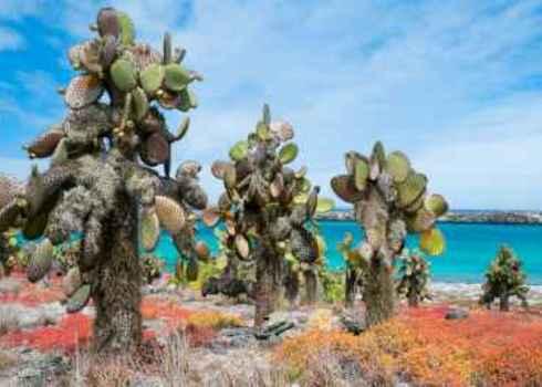 Kb As Beautiful Landscape Of Galapagos South Plaza Island 136326287 Blue Orange Studio