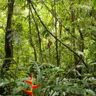 Ecosystem Structure View Of Forest Floor Amazon Rainforest Dr.Morley Read