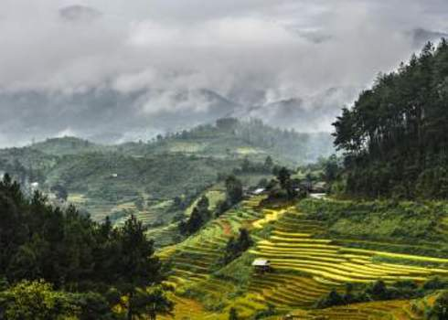 Landscape Rices Terraces And The Forests With Mountains Covered By Clouds 120765751 Vietnam Photography