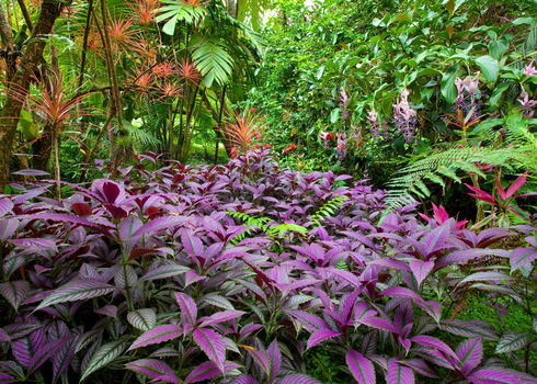 Species Diversity Colourful, Lush, Diverse Tropical Rainforest, Big Ilsand Hawaii 56252362 Photoinnovation