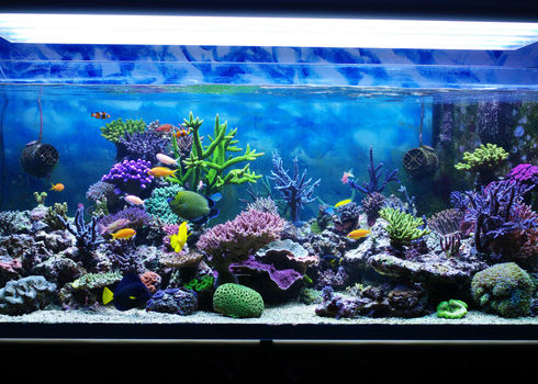 Wildlife Trade Aquarium Coral Reef 70318738 Dobermaraner