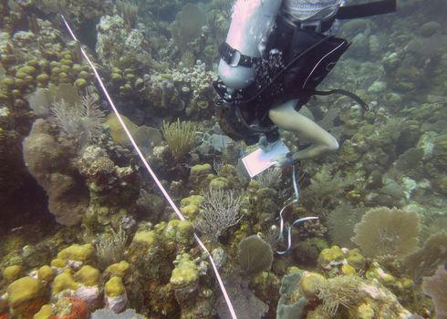 Marine Biologist Collecting Data, Utila, Honduras