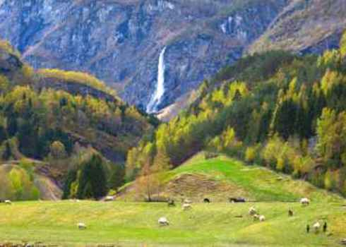 Landscape Connectivity Pasture With Sheep And Beautiful Waterfall Ozerov Alexander