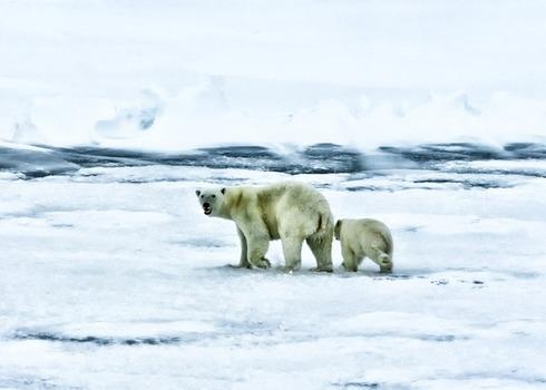Arctic 139397 640