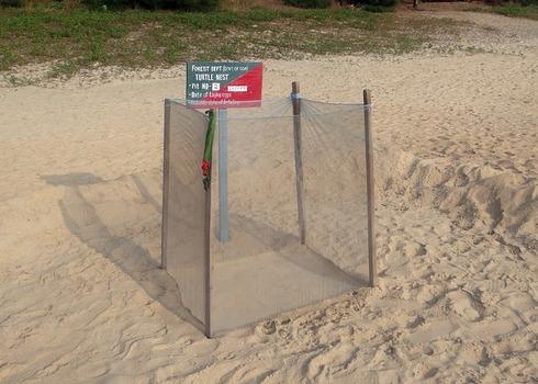 Turtle Nest 254394 640