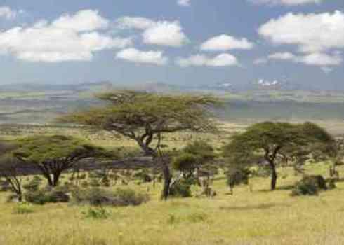 Privae P As Mount Kenya And Lone Acacia Tree At Lewa Conservancy, Kenya 176230328 Spirit Of America