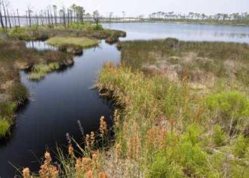 Iucn Iv Bon Secour National Wildlife Refuge Gulf Shores, Alabama Danny E Hooks