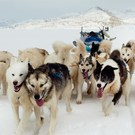 Dogs On Sea Ice Greenland Px