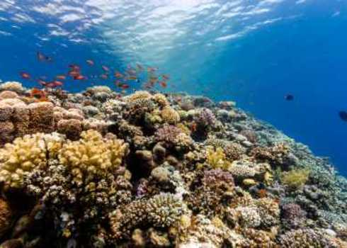 Biodiversity A Thriving Coral Reef Richard Whitcombe