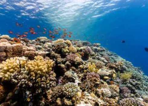 Biodiversity definition | Biodiversity A-Z