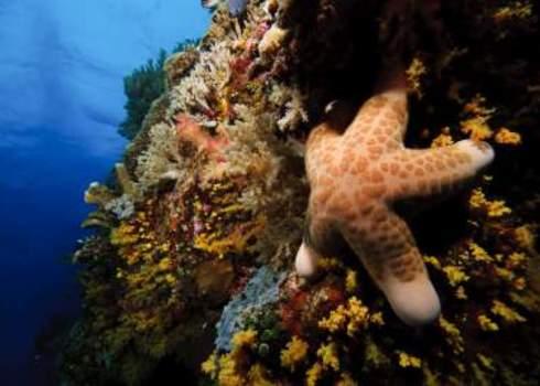 Species Richness Starfish Nazir Erwan Amin