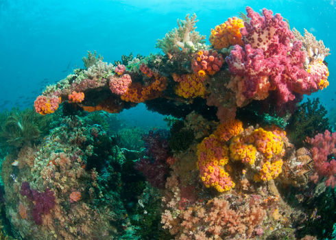 Ecosystem Engineer Colourful Reef Raja Ampat Indonesia Faup