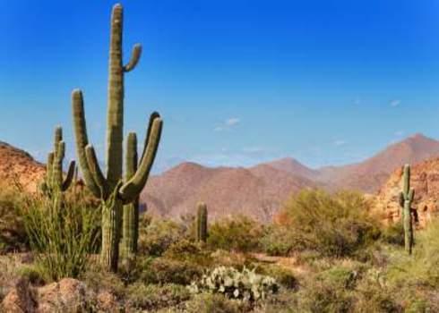 Downsizing Tonto National Forest, Arizona Jo Ann Snover